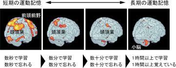 脳記憶画像化 今水寛教授