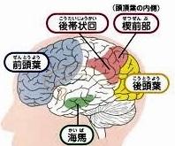 脳 けつ前部