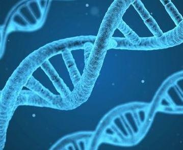 がんゲノム医療中核拠点病院、11施設が決定